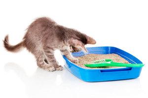 Котенок заходит в кошачий лоток