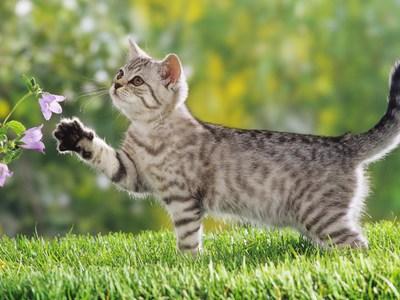 Препарат «Травматин» для кошек и собак: инструкция по применению