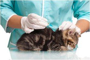 Первая прививка для котенка
