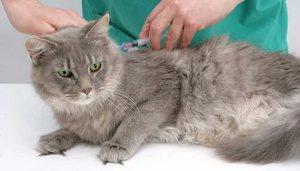 Проведение первой прививки животному