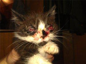 Как помочь кошке при заболевания