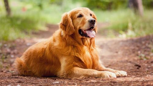 Распространенные собаки среднего размера