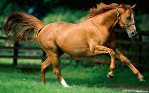 Скелет лошади-описание