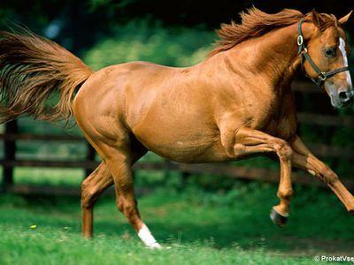 Разбираем анатомию лошади: скелет, стати, строение