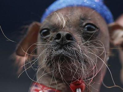 Рейтинг собак, признанных самыми страшными