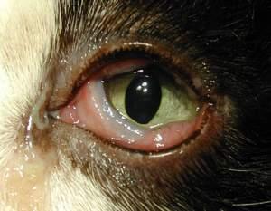 Поражение вирусом глаз