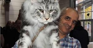 Какая самая большая порода кошек