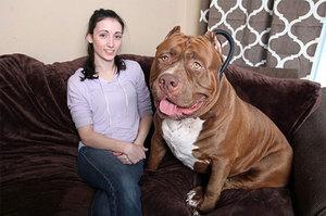 Волкодав и стандарты собак