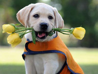 Самые добрые породы собак: виды и описание
