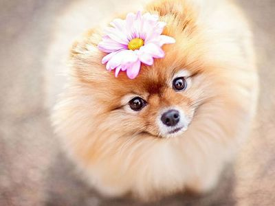Самые красивые и милые собаки в мире