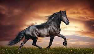 Самые невероятно красивые лошади