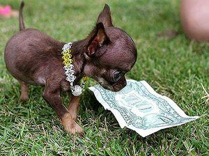 Какая собака самая маленькая