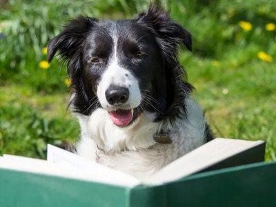 Самые умные породы собак в мире. Рейтинг собак по интеллекту