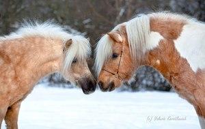 Особые породы пони