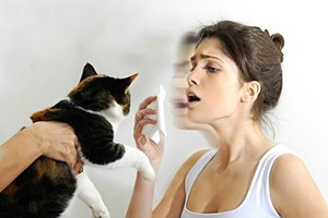 Аллергии у взрослых на кошек и признаки заболевания