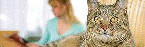 Болезнь -аллергия на котах