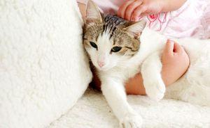 Глисты у кошки: симптомы и выведение