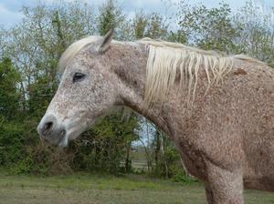 Как долго живут лошади
