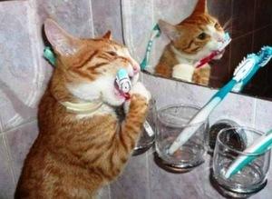 Чистим зубы коту - как и зачем это делать