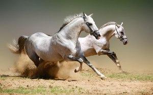 Скорость лошадей