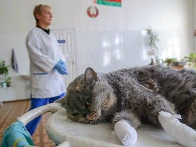 Удаление когтей у кошек и котов