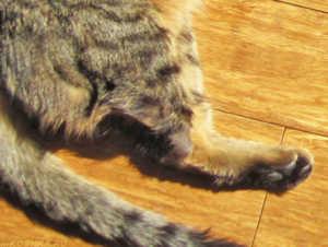 Если питомец сильно хромает после укола - обратитесь к ветеринару
