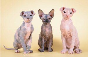 Особая порода кошек