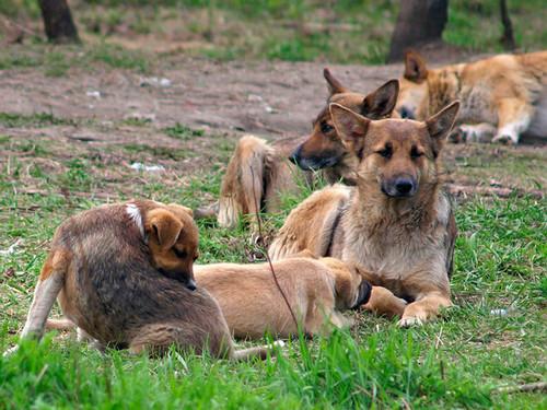Виды отпугивателей собак и их особенности