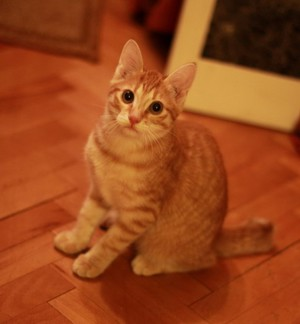 Котик-подросток в доме