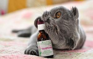 Вредна ли валерьянка для кошек если давать ее постоянно