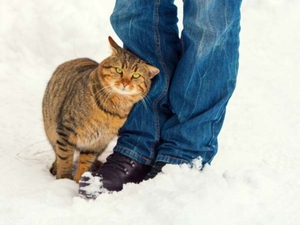 Коты трутся о людей-что это значит