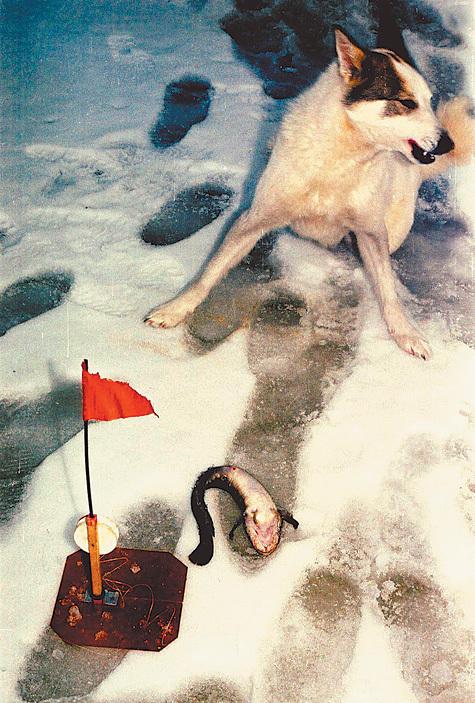 Деревенские псы не откажутся от рыбы