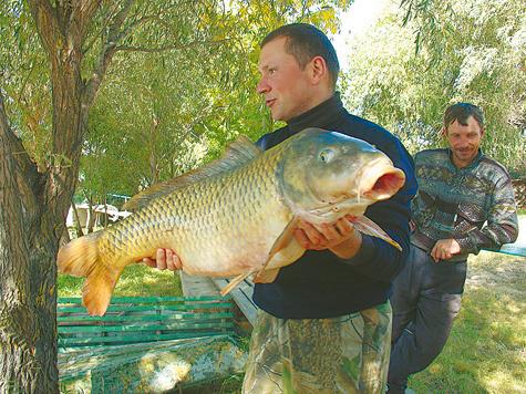 Клев трофейного сазана в низовьях реки Протока