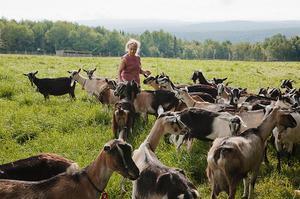 Порода коз -альпийская