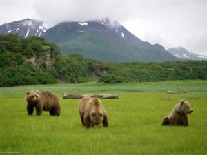Места обитания бурых медведей