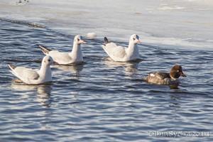 Птицы в зимнее время