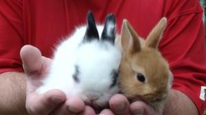 Декоративные кролики - содержание и уход