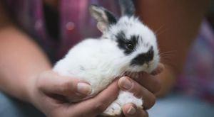 Срок жизни кролика в домашних условиях