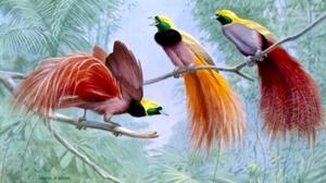 Экзотические птицы: описание