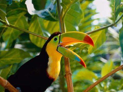 Экзотические птицы: виды и описание