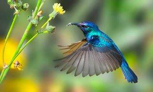 Где обитает колибри
