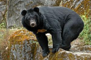 Как живут медведи