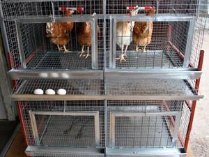 Как собрать клетку для кур