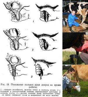Раздой козы после окота