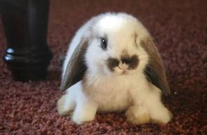 Пятнистый кролик