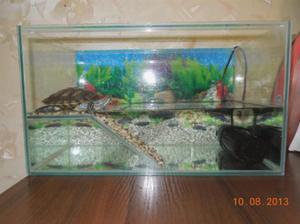 Какие условия создатть для черепах