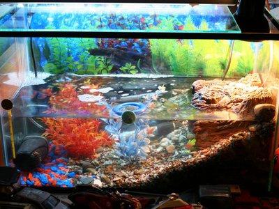 Как обустроить аквариум для красноухой черепахи