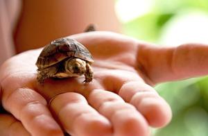 Способы определить пол у черепах