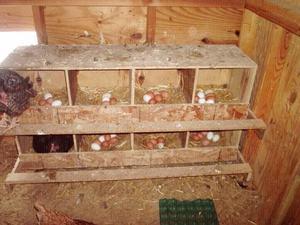 Конструкция гнезда