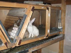 Преимущества клеток для кроликов своими руками